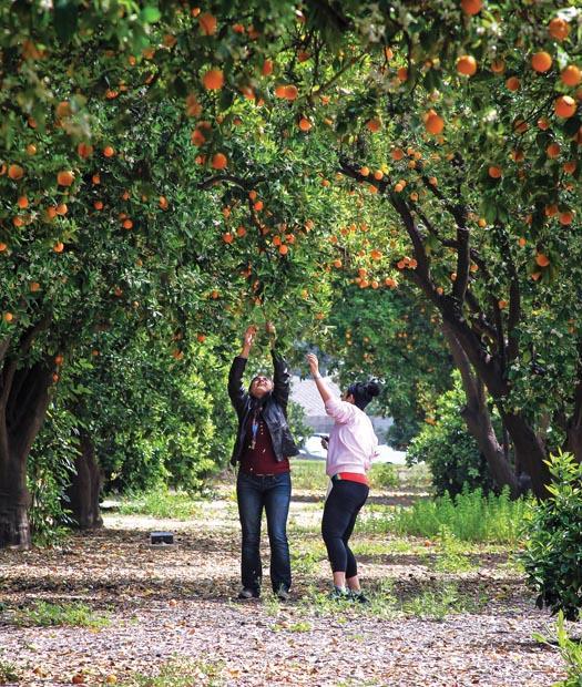 Image result for orange grove northridge