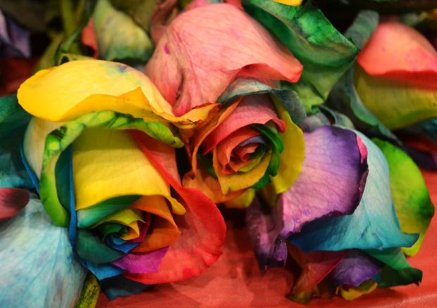 Rainbow Graduation was held at the Northridge Center, USU, on Monday. Upon receiving their certificates, the 26 graduates were handed a rainbow rose.  Photo credit: John Saringo-Rodriguez / Photo Editor