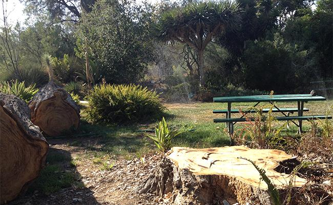 There are plenty of getaway spots on campus for students. The botanical gardens have benches for students to relax and get away from the stresses of class. The garden has different plants, trees, and flowers. Photo Credit: Nicole Socala/Features Editor