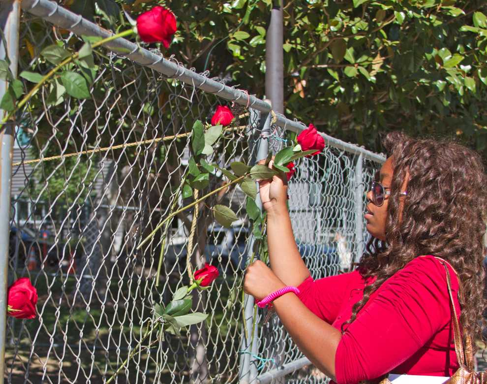 Jessica Williams, upper division seat II senator, places a rose in the fence surrounding the new Matador statue as part of the 'Tradition of the Rose' which was reinstated at the A.S. meeting Tuesday. Photo Credit: Tessie Navarro / Visual Editor