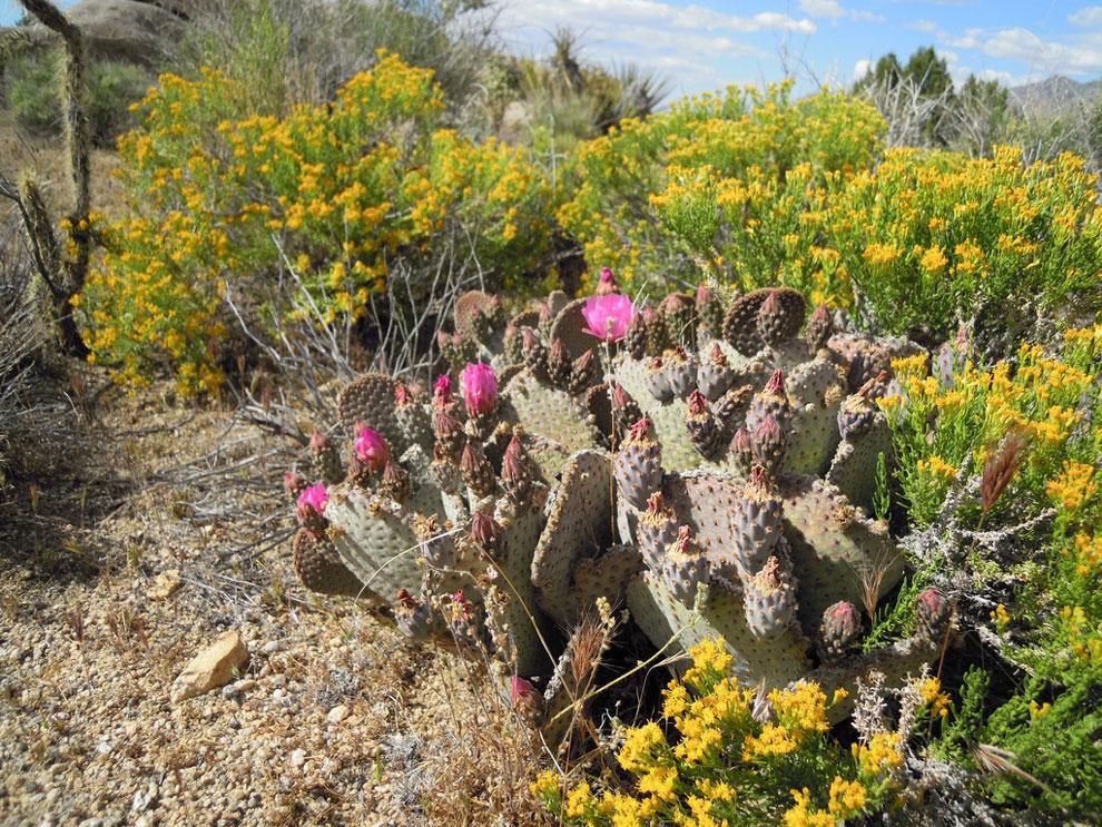 Desert vacations for Spring Break