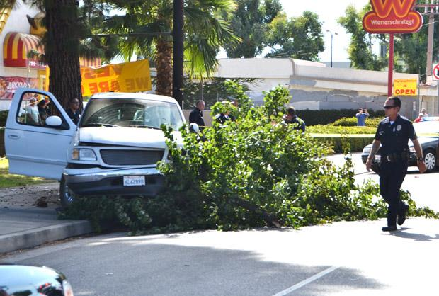 Two alleged armed robbers crashed into a tree on Nordhoff Street after a LAPD pursuit Thursday afternoon. Photo credit: John Saringo-Rodriguez / Photo Editor