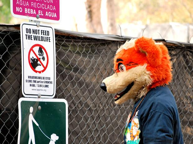 A furry is a member of the furry fandom, a subculture consisting of people who are interested in anthropomorphic fictional characters. Photo credit: Crystal Lambert / Contributor