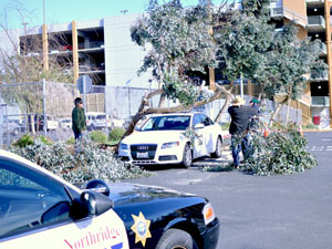 Tree topples on top of student's car in B3 parking lot