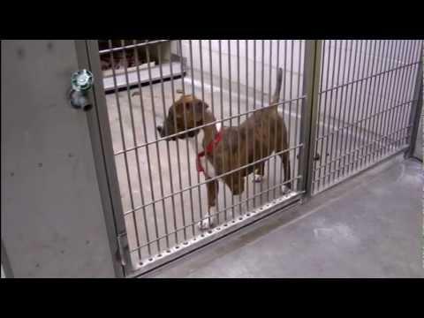 Valley View News; Cassie Gaskin - Animals In Need