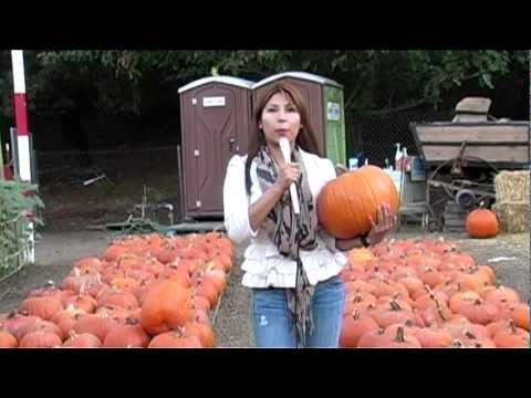 Valley View News; Sonia Martinez - Pumpkin Economy