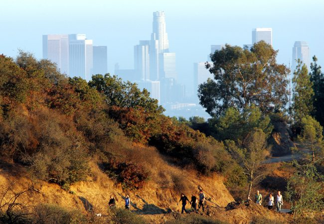 Griffith park offers great views of LA and some of the best hiking trails in town. Photo courtesy of MCT