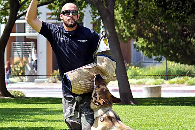 During+CSUN+PD%27s+fundraising+event+%22Meet+the+Dogs%2C%22+Daniel+Inglis%2C+head+K9+trainer+at+Inglis+Police+Dog+Academy%2C+demonstrates+how+a+dog+would+attack+a+potential+suspect.+The+event+was+held+Wednesday%2C+on+Bayramian+Lawn.+Photo+Credit%3A+Lucas+Esposito+%2F+Daily+Sundial