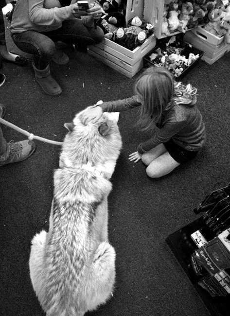 A young girl has her photo taken as she pets a docile Journey. Instances like these show kids that wolves may be big but not so bad or scary. Photo Credit: Patricia Perdomo/Contributor