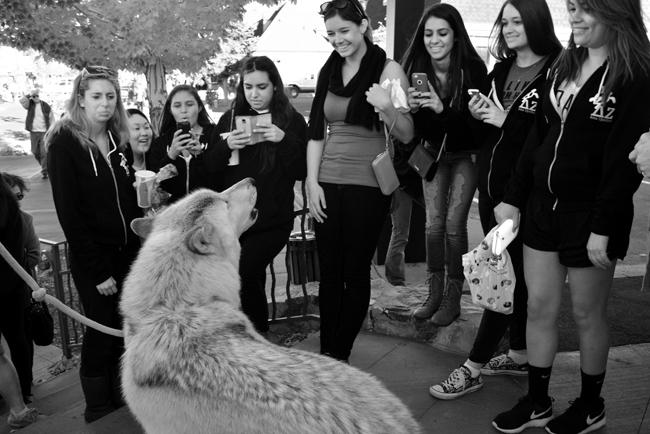 A group of Delta Zeta Sorority sisters from CSUF had just squealed so high pitch at Journey that it caused him to begin howling.  Photo Credit: Patricia Perdomo/Contributor