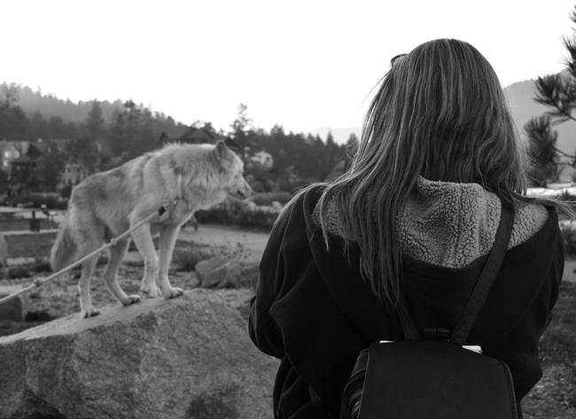 Julie photographing Journey in a more natural setting. She was tring to get promo shots for the Wolf Mountain Sanctuary.  Photo Credit: Patricia Perdomo/Contributor