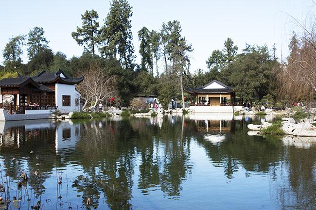 The+Huntington+Library+in+San+Marino+features+several+gardens%2C+including+The+Garden+of+Flowing+Fragrance%2C+one+of+the+largest+Chinese+gardens+outside+of+China.++%28Trevor+Stamp+%2F+Multimedia+Editor%29