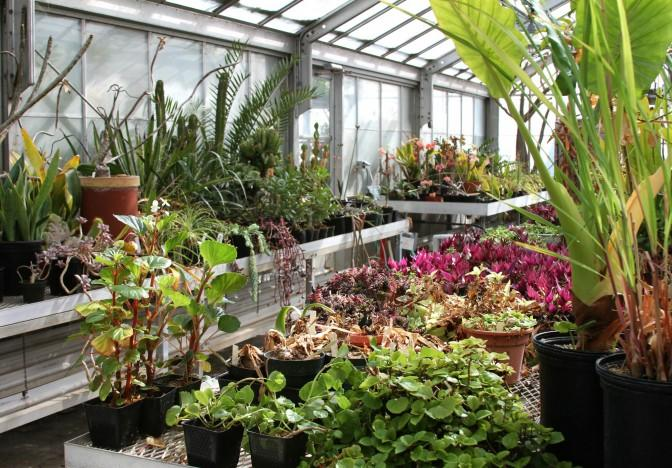 The CSUN Botanic Garden has a wide variety of tropical flowers and plants that grows inside their green house.