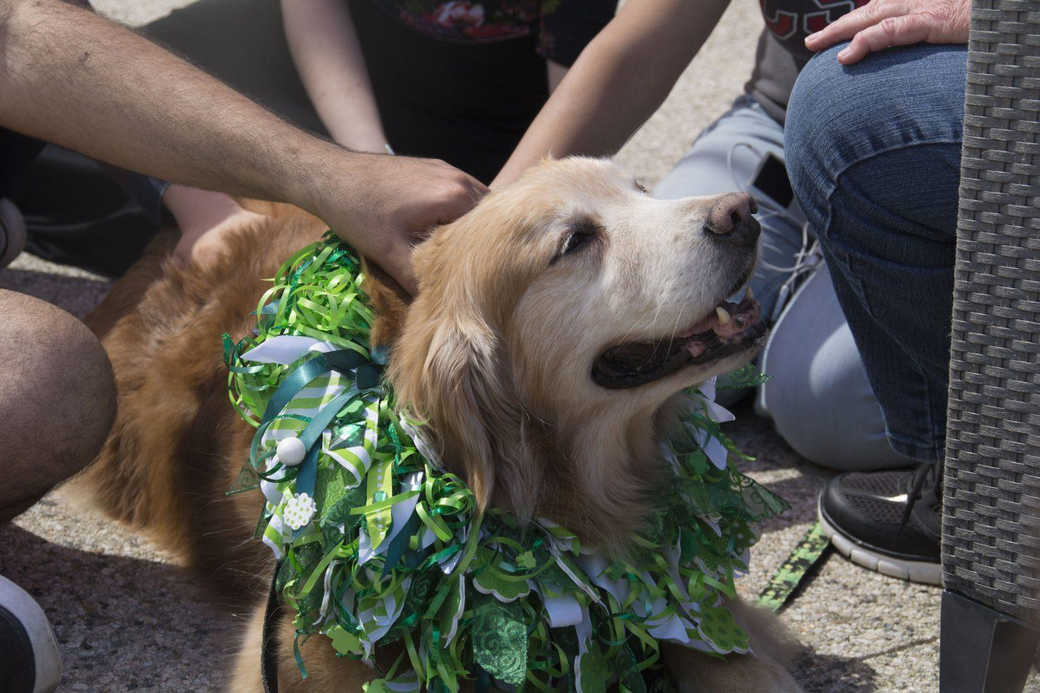 CSUN+students+went+to+the+Oasis+center+March+15+to+pet+dogs+like+Hank%2C+a+10-year-old+golden+retriever%2C+cancer+survivor+and+therapy+dog.+Photo+credit%3A+Nicollette+Ashtiani