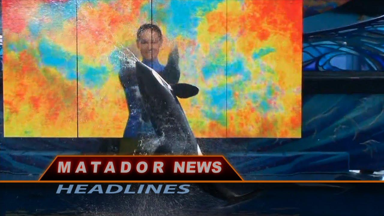 photo of whale from Matador News Headlines