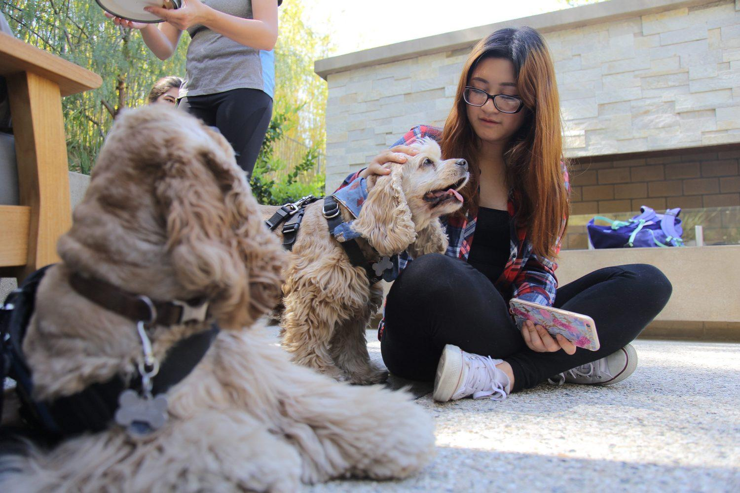 Christina+Lee%2C+freshman+journalism+major%2C+visited+The+Oasis+Wellness+Center+Tuesday+afternoon+to+pet+the+therapy+dogs.+%28Magaly+Barajas%2FThe+Sundial%29