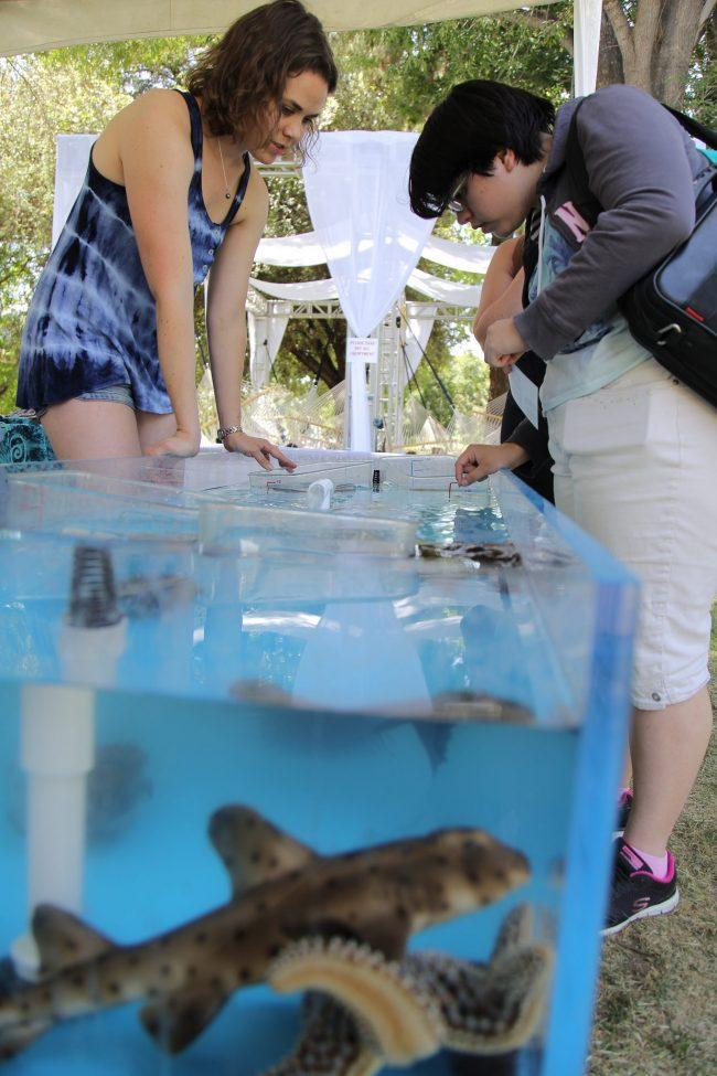 Graduate student Zoe Scott, majoring in ecology & evolution, informs Junior, Vaentina Moreno, about the animals in the tank water tank.  (Magaly Barajas / The Sundial)