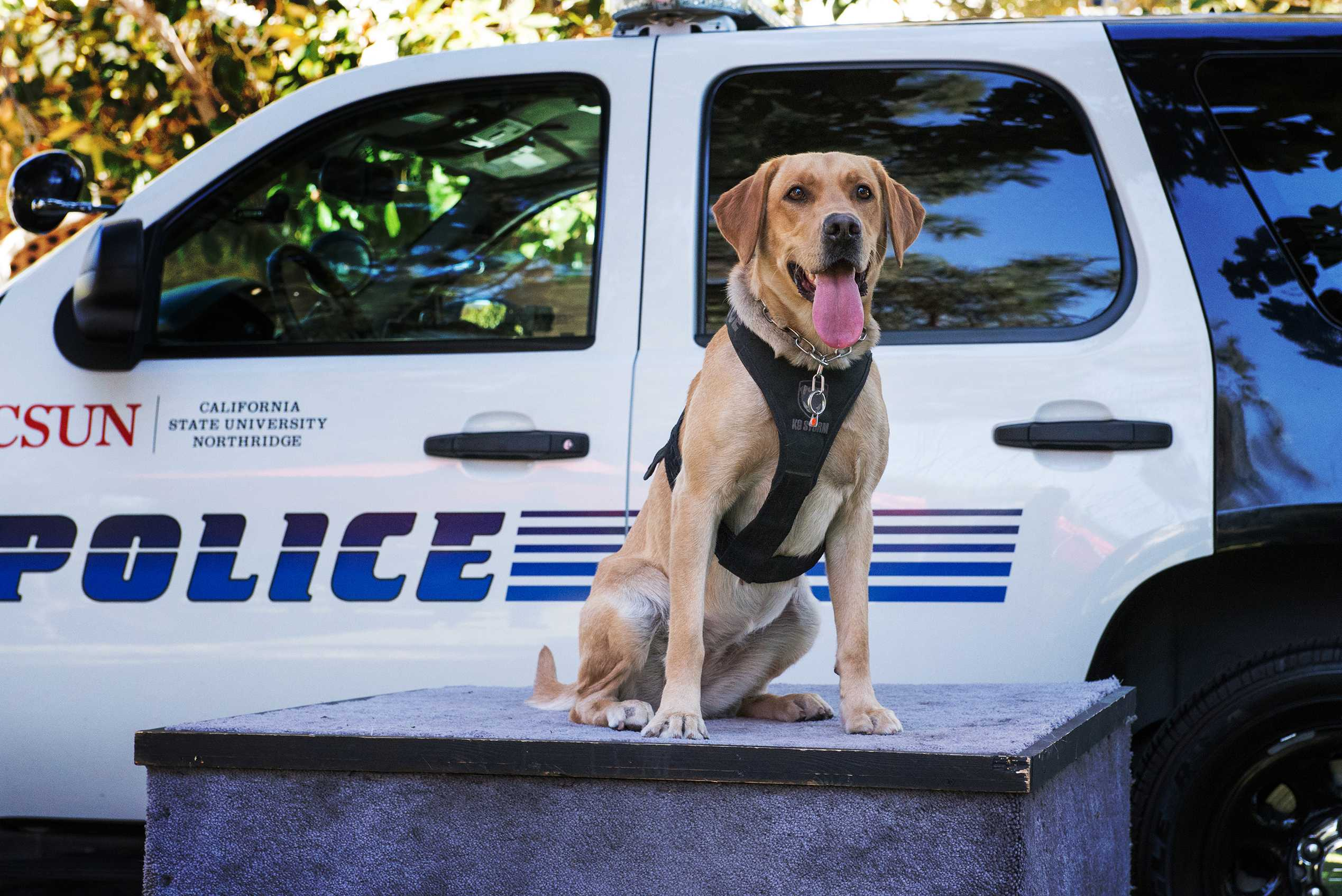 Police dog pictured in front of police car