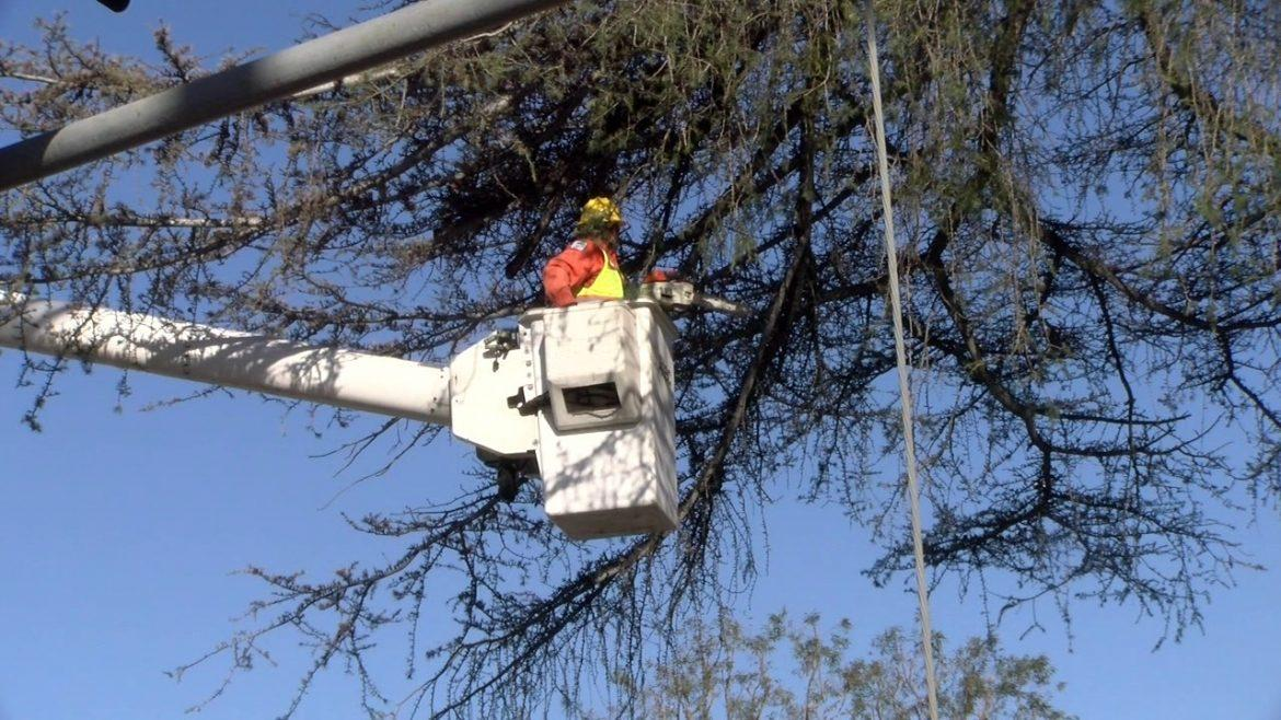 man trims tree branch