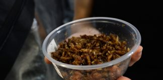 container of roasted cricket pictured
