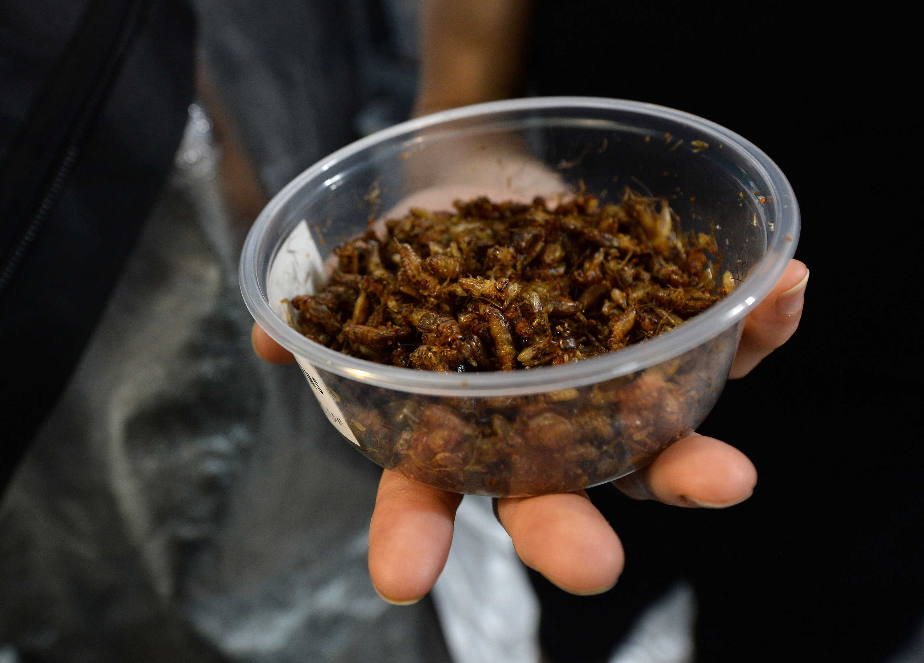 Co-founder Andrew Brentano, of Berkeley, hold a container of roasted crickets at Tiny Farms in Oakland, Calif., on Thursday, Aug. 4, 2016. Tiny Farms breeds and raises crickets, which have become a trendy course of protein. The insects can be roasted and consumed as a snack or ground into