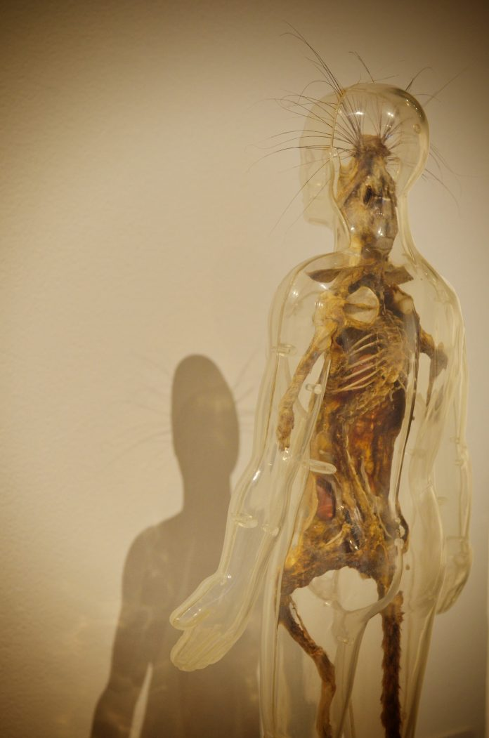 clear outline of a mans body with visible human anatomy inside of it