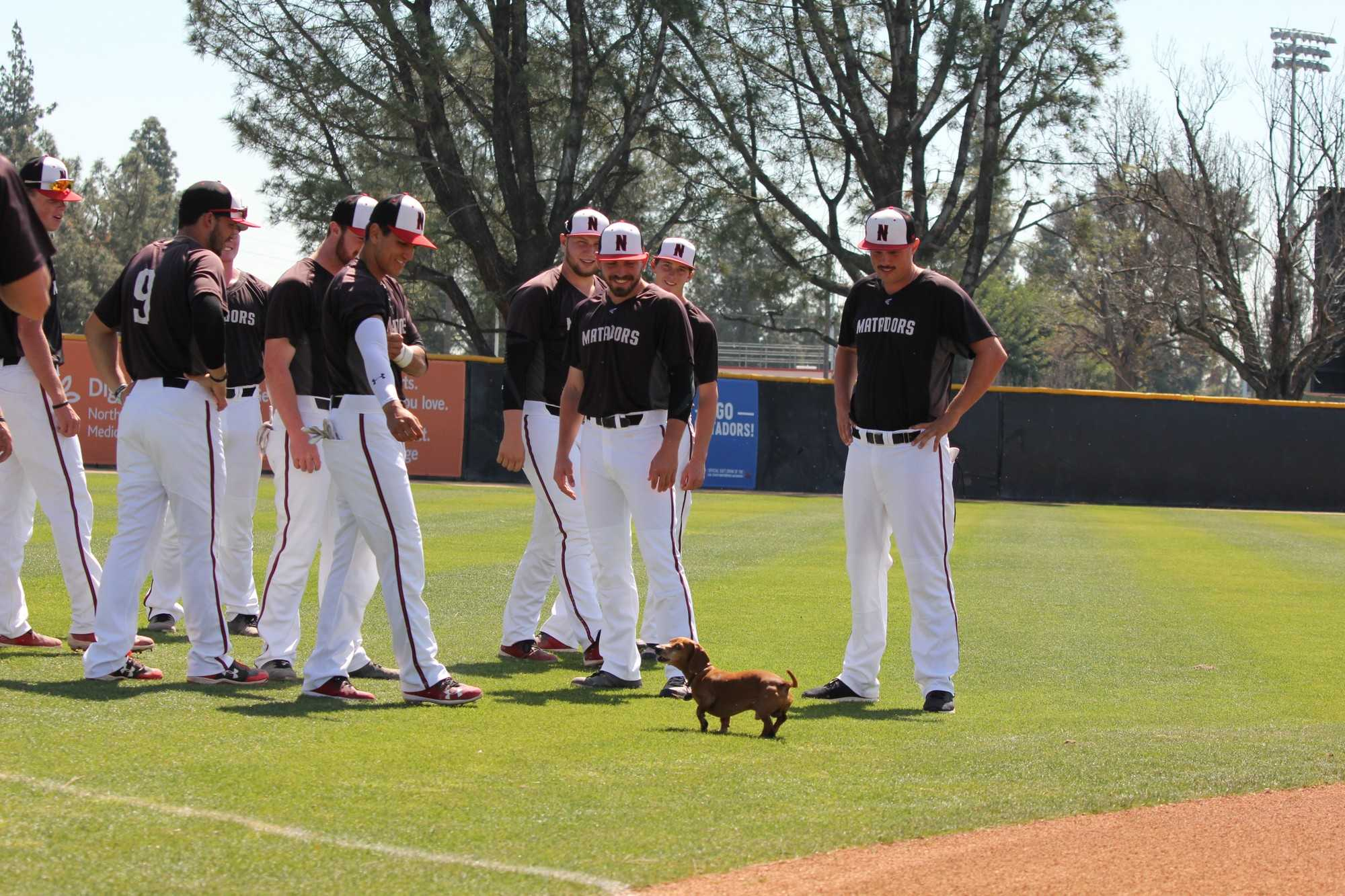 CSUN matadors baseball team on the field happily looking at a wiener dog