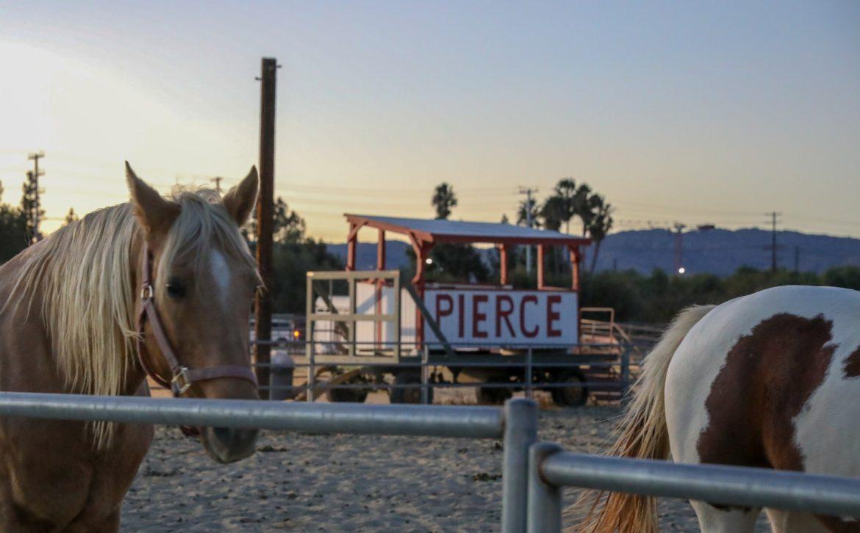 244 horses