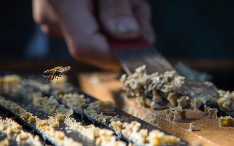 Bee 9.jpg
