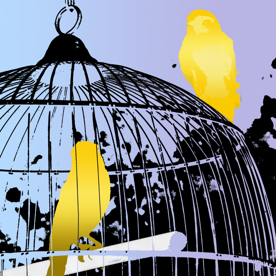 one+bird+in+a+cage.+Another+bird+at+the+outside