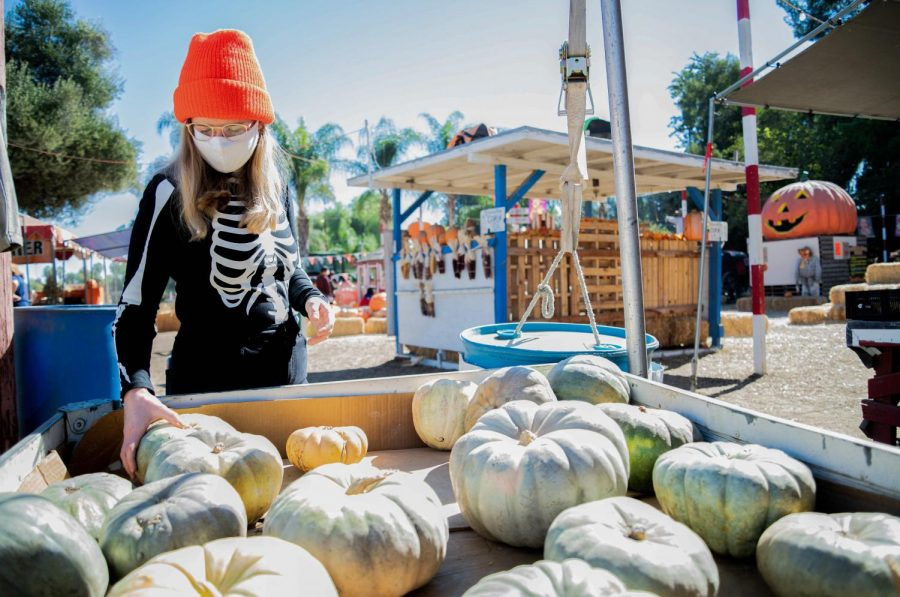 Crystal Baxley looks at pumpkins at Tapia Brothers Farm in Encino, Calif., on Thursday, Oct. 29, 2020.