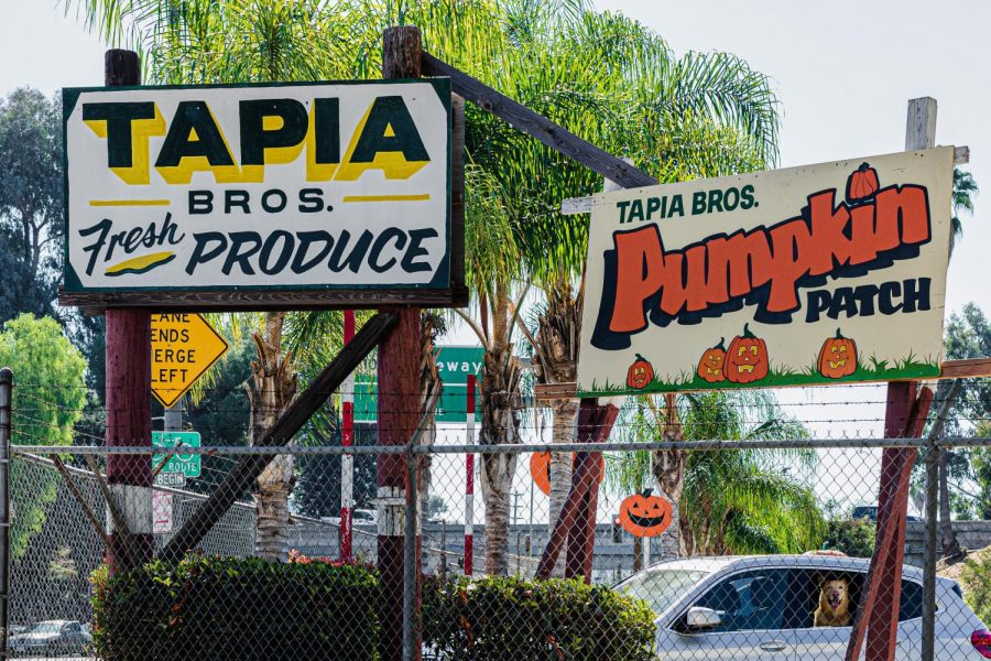 Billboards of Tapia Brothers Fresh Produce and Pumpkin Patch in Encino, Calif., on Thursday, Oct. 29, 2020.