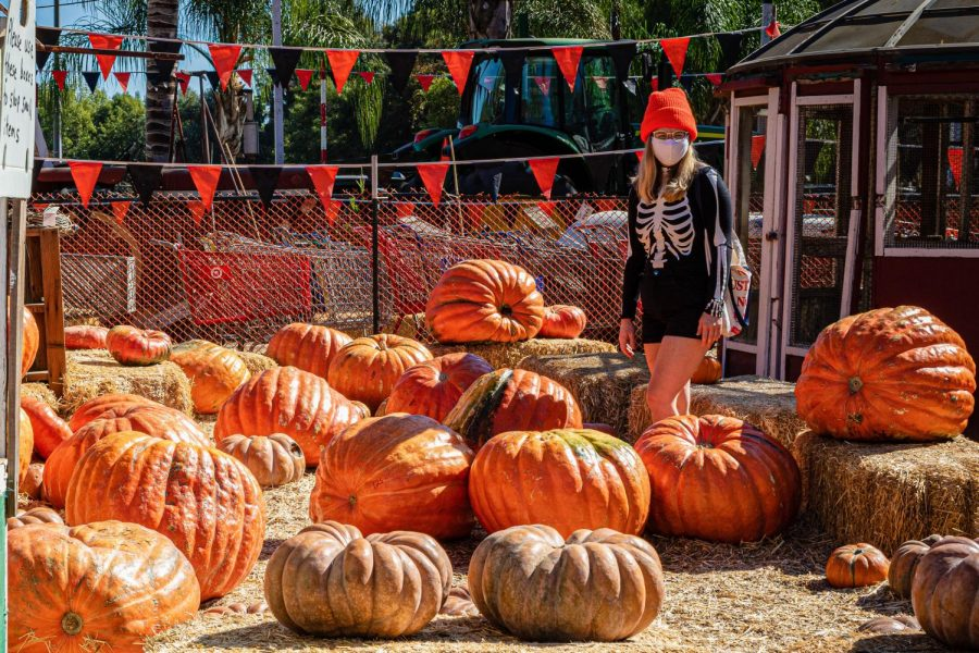Crystal Baxley walks in the Pumpkin Patch at Tapia Brothers Farm in Encino, Calif., on Thursday, Oct 29, 2020.