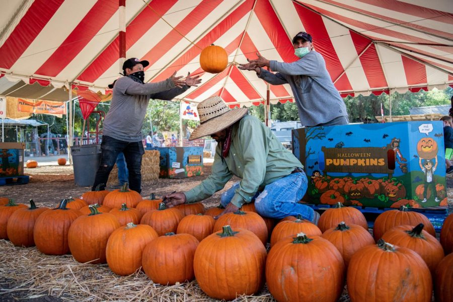 Benjamin Cruz, left, and Marcos Melendez, right, place pumpkins on the ground while Tomas Arias, center, writes prices on them at Tapia Brothers Farm in Encino, Calif., on Thursday, Oct. 29, 2020.