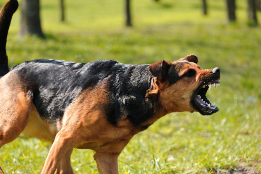 angry+dog+with+bared+teeth