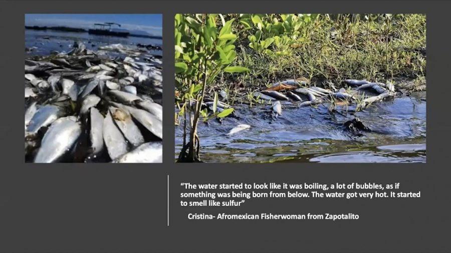 Image+of+presentation+of+the+dead+fish+in+Oaxaca.+The+fish+died+due+to+the+large+amounts+of+toxins+that+entered+the+water+after+an+earthquake+in+2017.