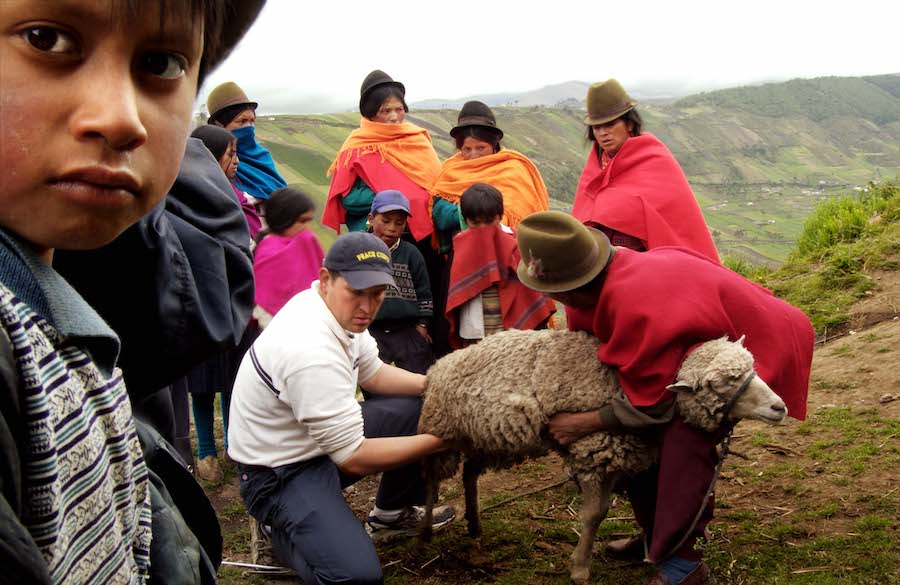 Group of people moving a sheep in the Andes