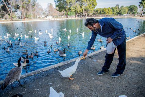 Frank Morde feeds the ducks at the Reseda Park Pond on Feb.11, 2021.