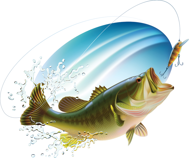 Illustration of largemouth bass is catching a bite and jumping in water spray.