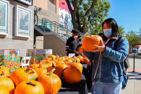 Students pick up pumpkins provided by Associated Students at the 7th annual Pumpkin Fest at CSUN in Northridge, Calif. on Tuesday, Oct. 12, 2021,